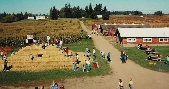 Bi-Zi Farms Pumpkin Patch Vancouver