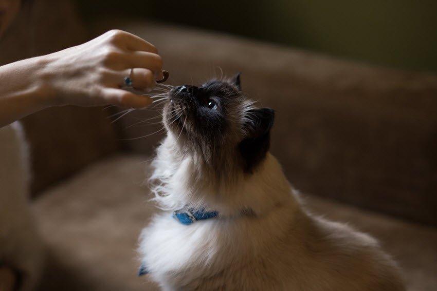 training a cat with treats