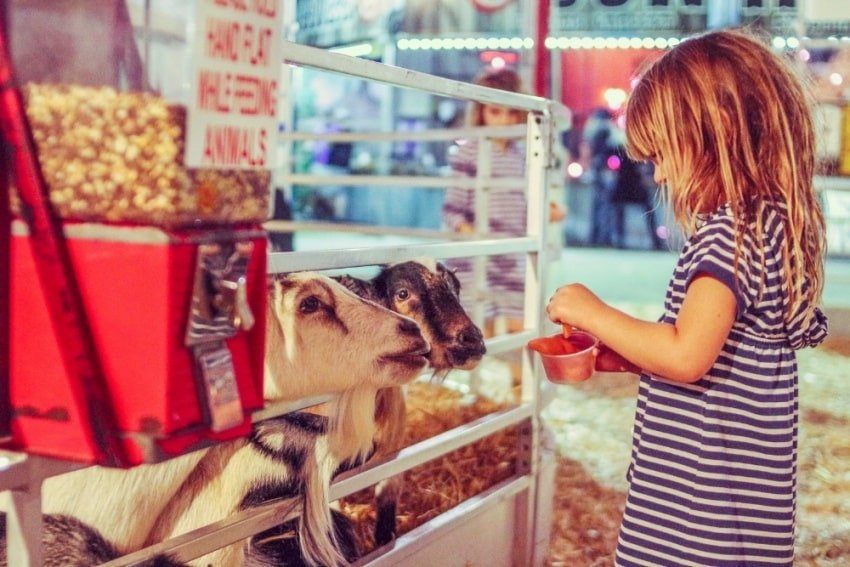 child in a petting zoo