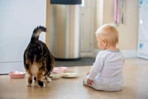 Can Cats Eat Baby Food?