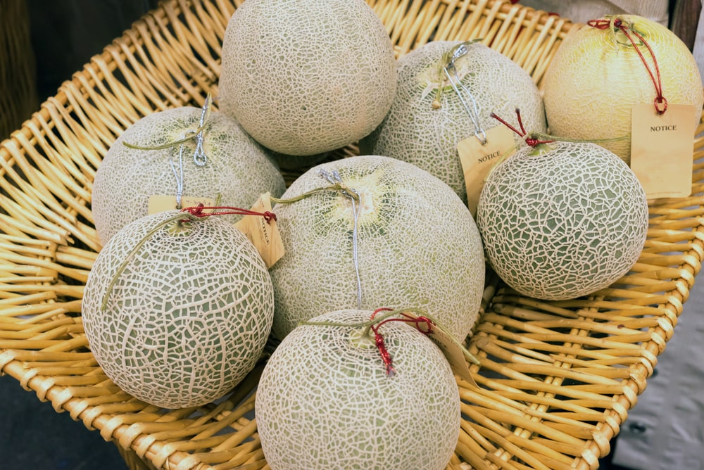 Fresh ripe melons or Cantaloupe melons