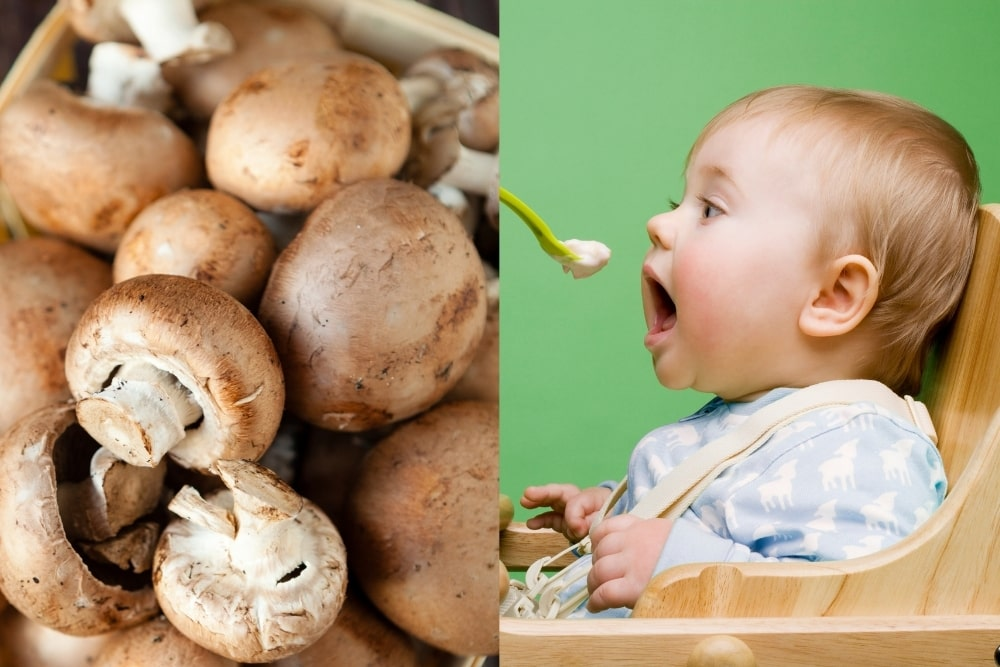 Can Babies Eat Mushrooms? Is It Safe? Are There Benefits?
