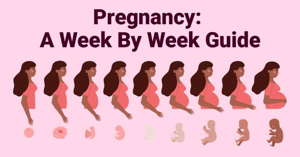 Pregnancy A Week By Week Guide