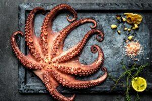 Can Pregnant Women Eat Octopus?